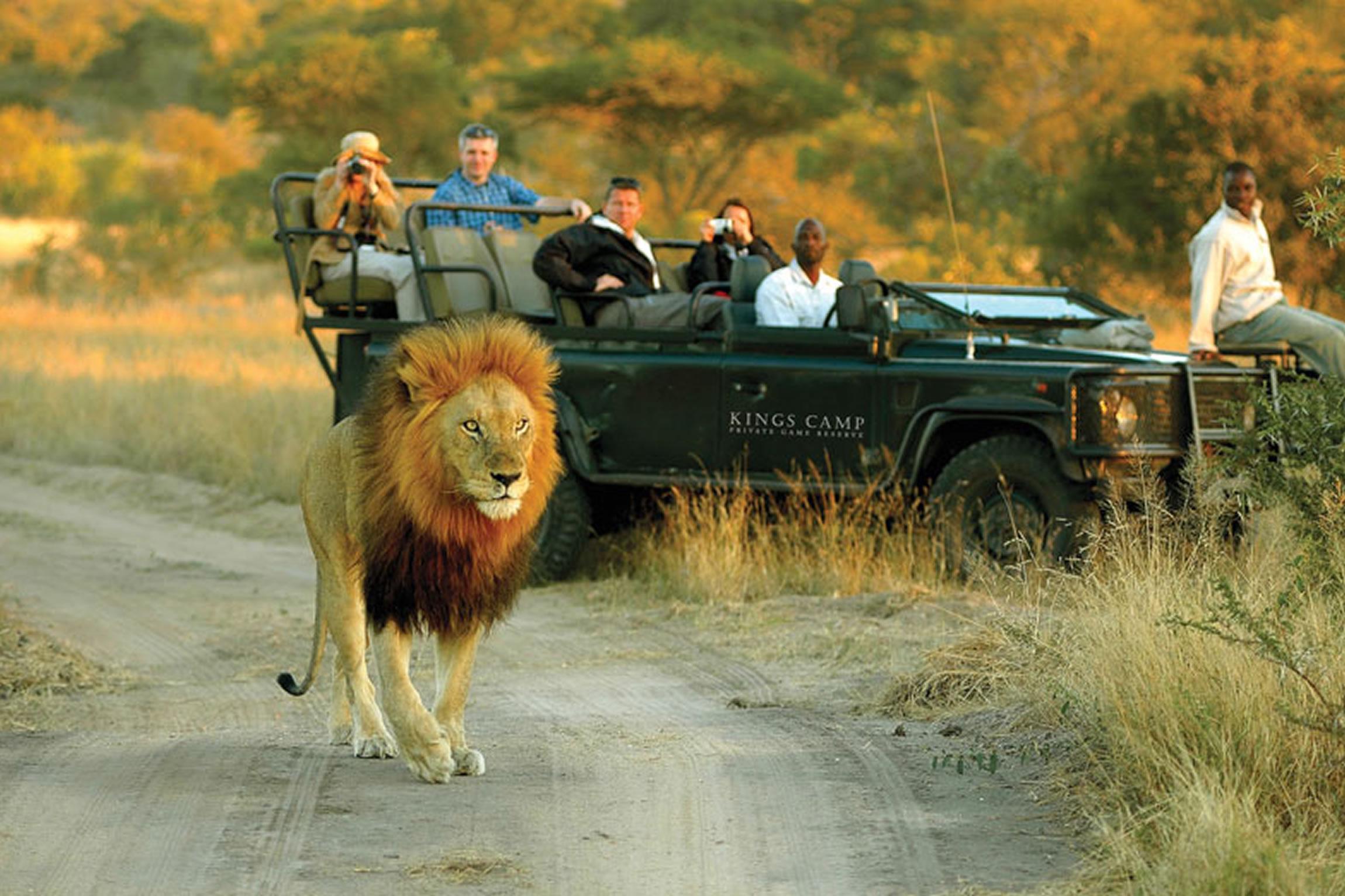 6ce6737d South-Africa-Tailormade-Tours-Safari-Lodge_Safari-drive-to-view ...