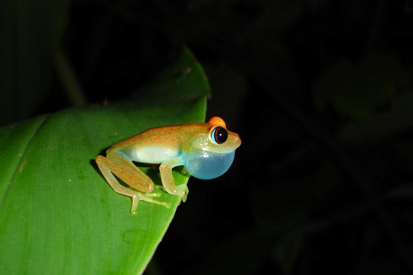 Madagascar-Wildlife-Tours_Accommodation_Andasibe-Hotel-6