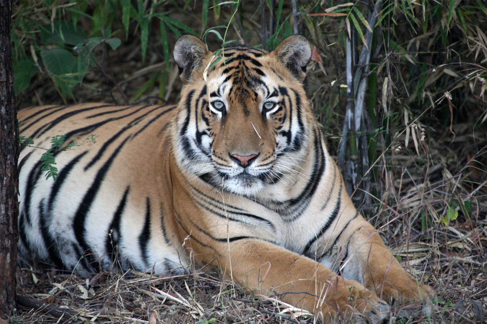 India-Wildlife-Tours_Accommodation_Tiger-Trails-5