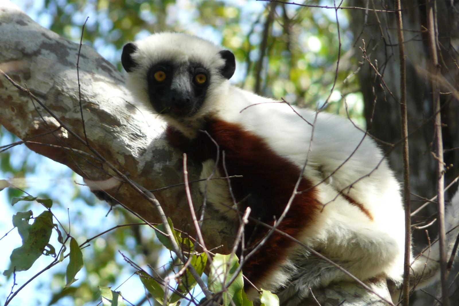 Madagascar-Wildlife-Tours_Accommodation_Blue-Vanga-1