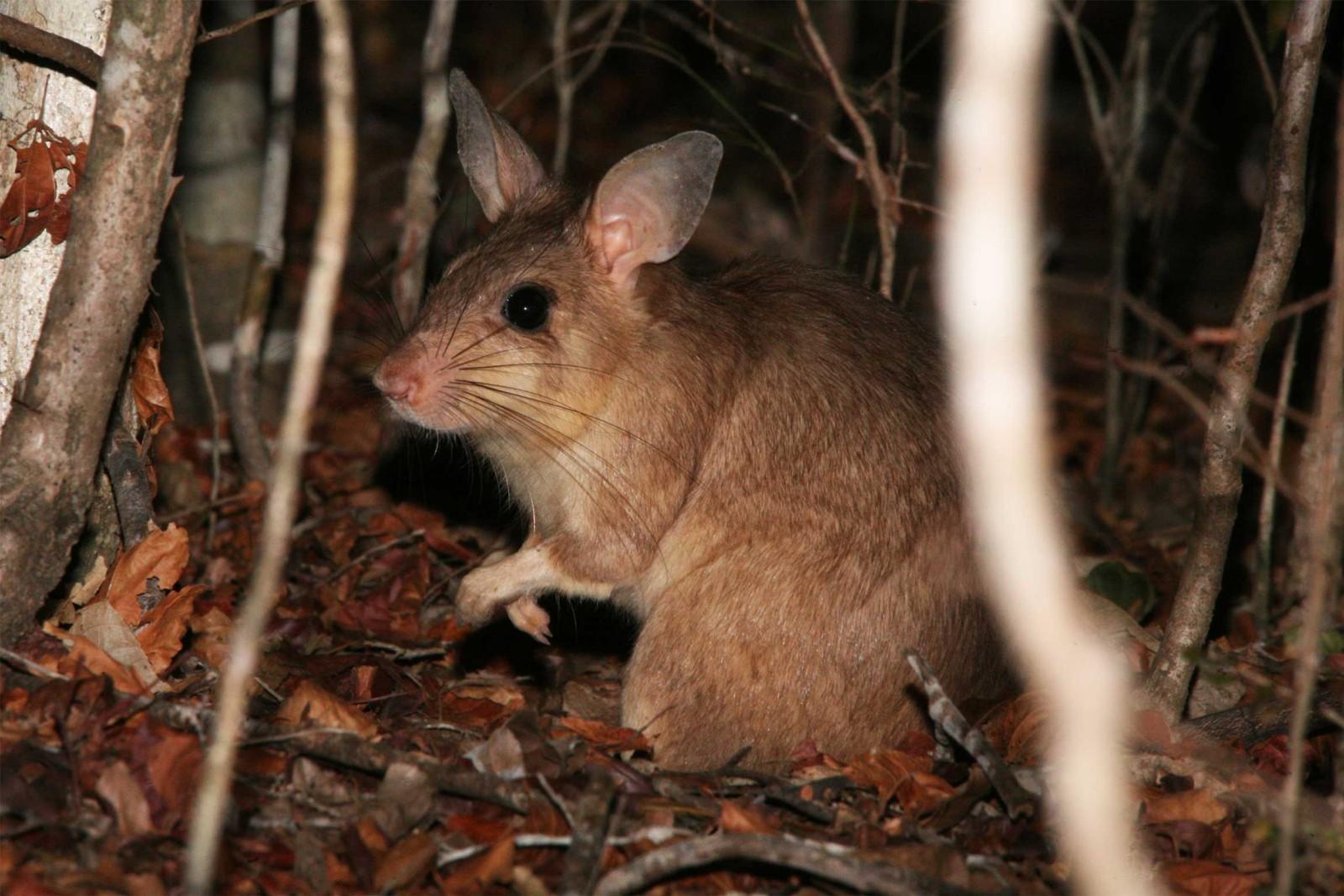 Madagascar-Wildlife-Tours_Accommodation_Kirindy-Eco-lodge-9jpg