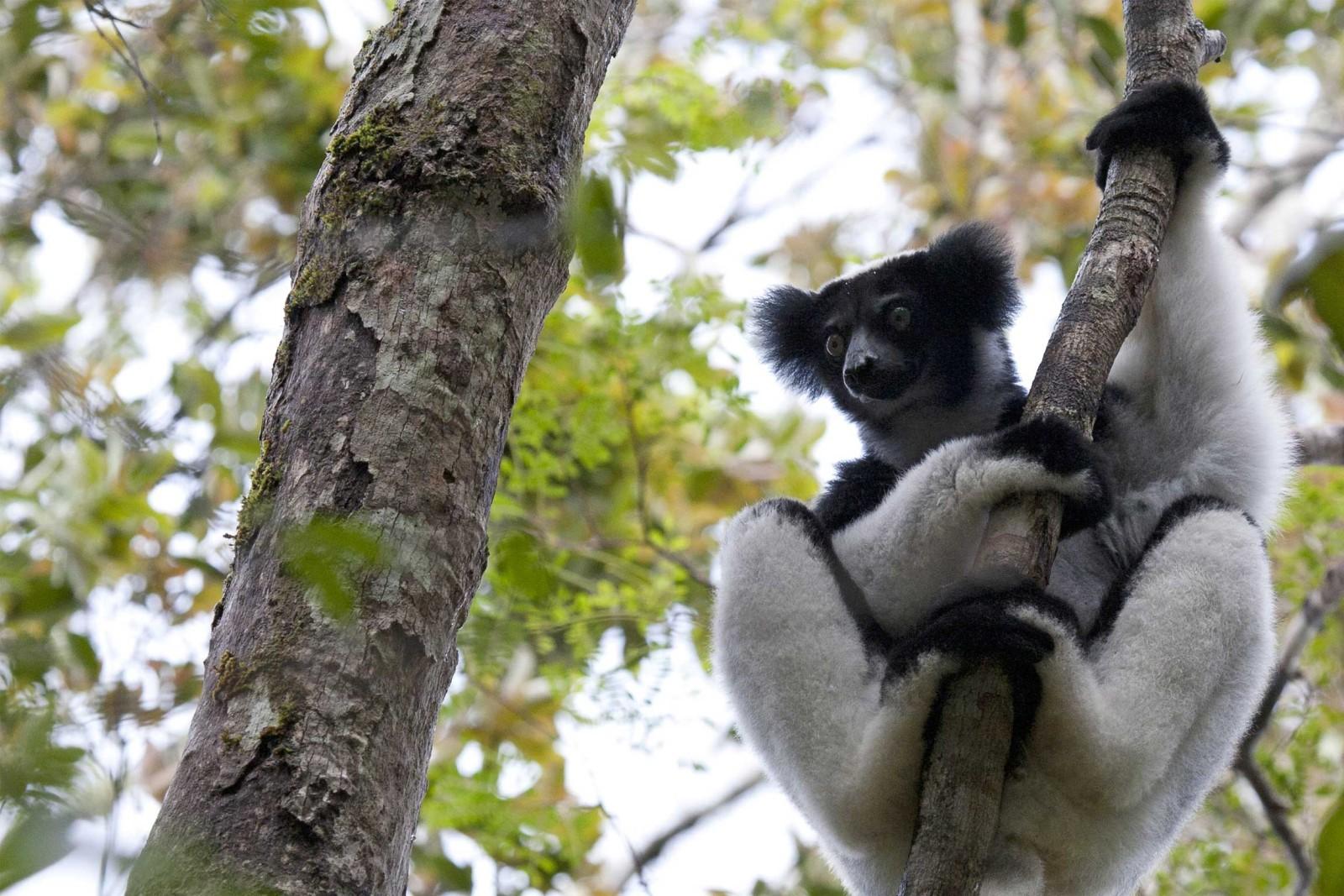 Madagascar-Wildlife-Tours_Accommodation_Saha-Forest-Camp7