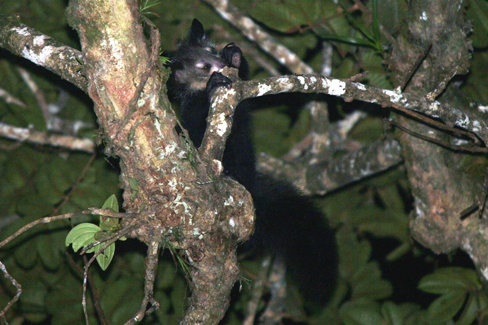 madagascar-wildlife-tours_tour_aye-aye