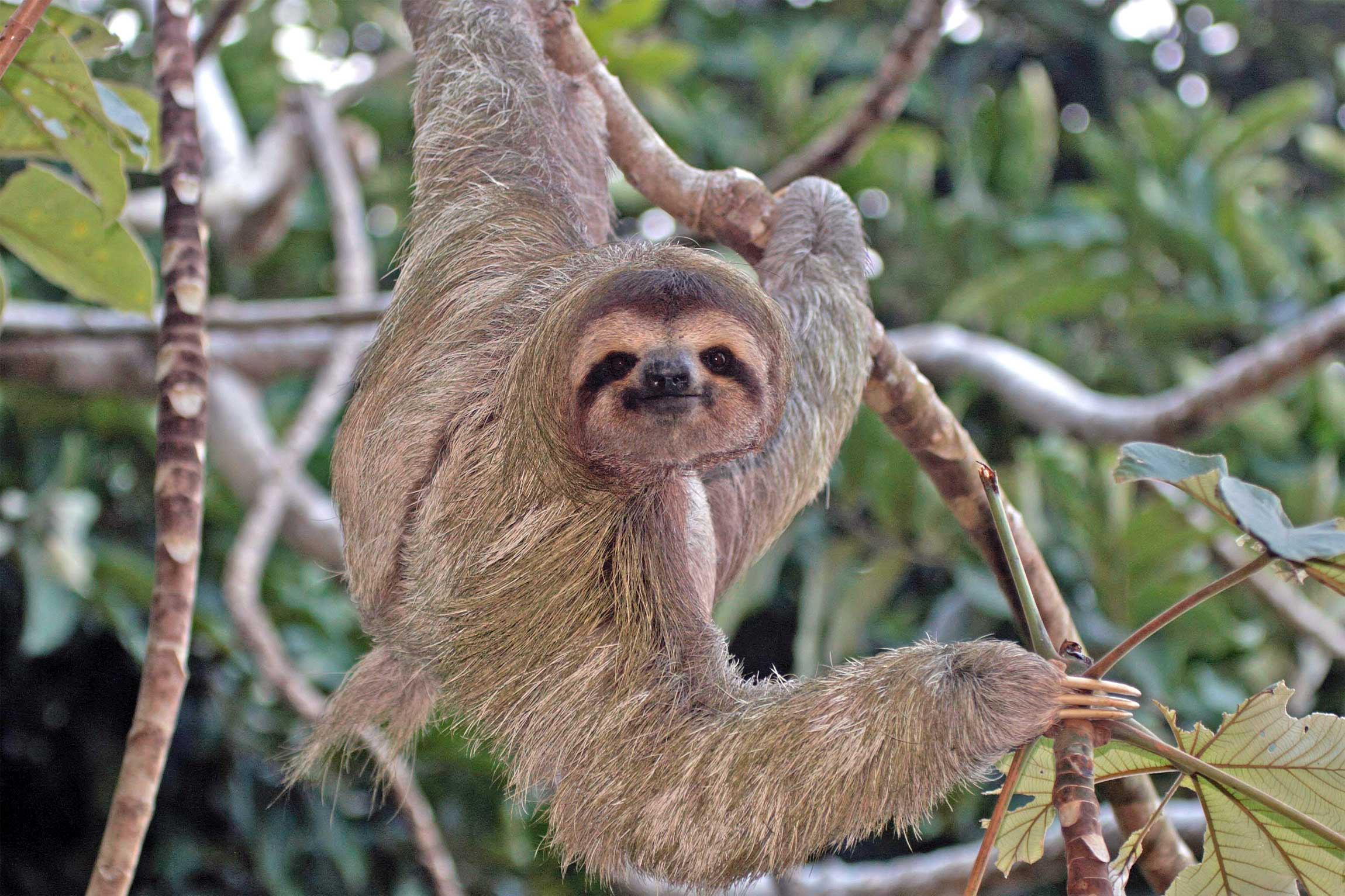 Costa Rica Wildlife Holidays And Tailor Made Tours