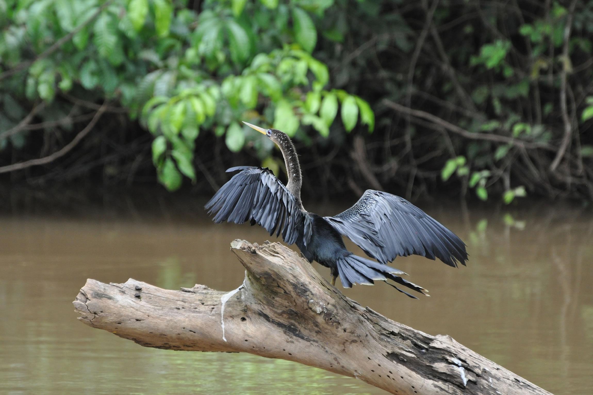 Cano Negro Wildlife Refuge Reef And Rainforest Tours