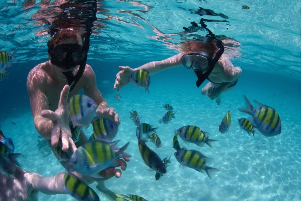 Belize-Wildlife-Tours-Placencia-Beach-Snorkelling