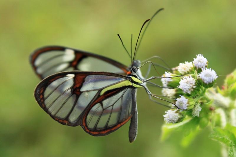 Brazil-Tailormade-Tours-Atlantic-Rainforest_Butterfly