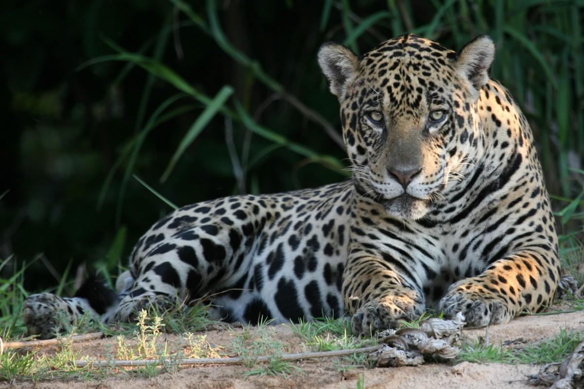 southwild jaguar flotel and suites reef and rainforest tours. Black Bedroom Furniture Sets. Home Design Ideas