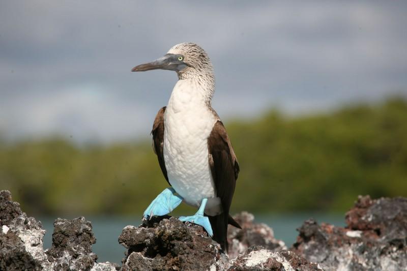 Ecuador-Galapagos-Tailormade-Itineraries_Birding