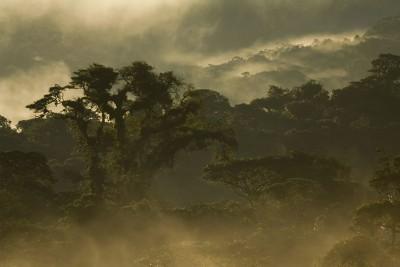 Ecuador-Tailormade-Tours-Cabanas-San-Isidro-Lodge_Forest-View