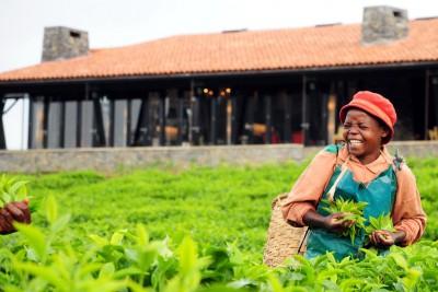 Rwanda-Tailormade-Tours-Nyungwe-Forest-Lodge_Picker