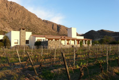 Argentina-Holiday-Tours-Vinas-de-Cafayate-Wine-Resort_Vinyard