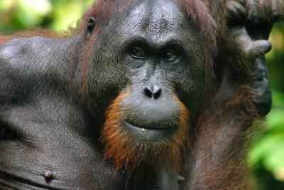 Borneo-Wildlife-Tours_Tours_Borneo-Diversity