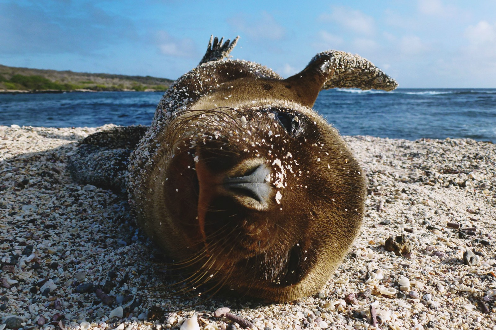 The Dazzling Diversity Of Ecuador And The Galapagos For