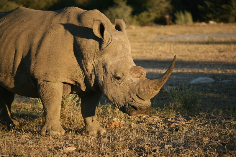 Namibia-Wildlife-Tours-Ongava-Reserve_Rhino