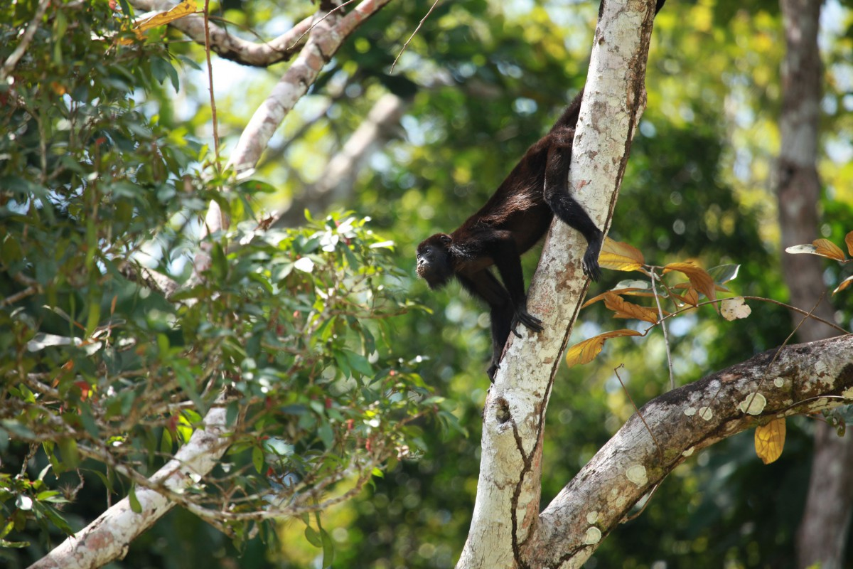 Panama S Fabulous Forests And Coral Reefs Reef And Rainforest Tours
