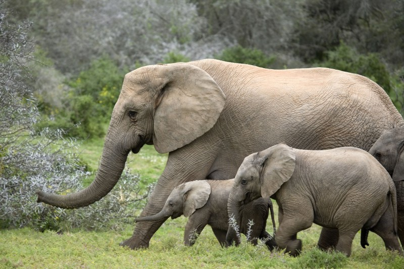 South-Africa-Wildlife-Tours-Itinerary-4_Elephant-Family