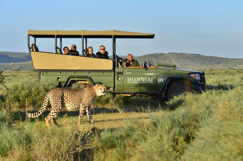 South-Africa-Wildlife-Tours_Accommodation_Bayethe-Tented-Lodge-7