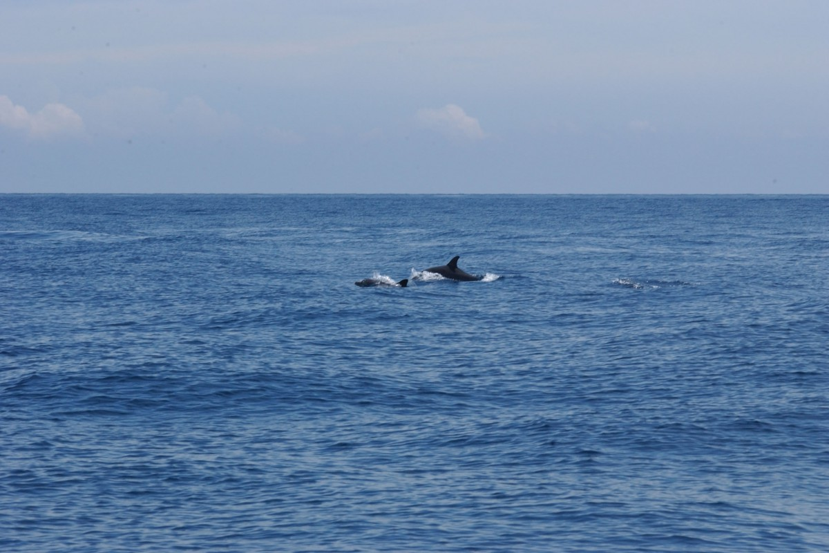 Angel Island Resort Reef And Rainforest Tours