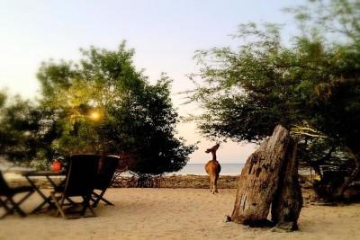 Indonesia-Tailor-made-holidays-Menjangan-Beach-Villas_Deer