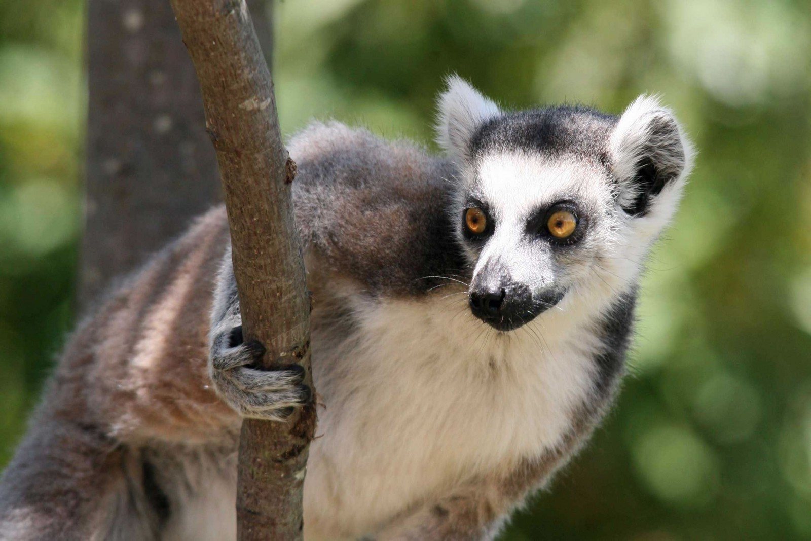 Reef And Rainforest Tours Madagascar