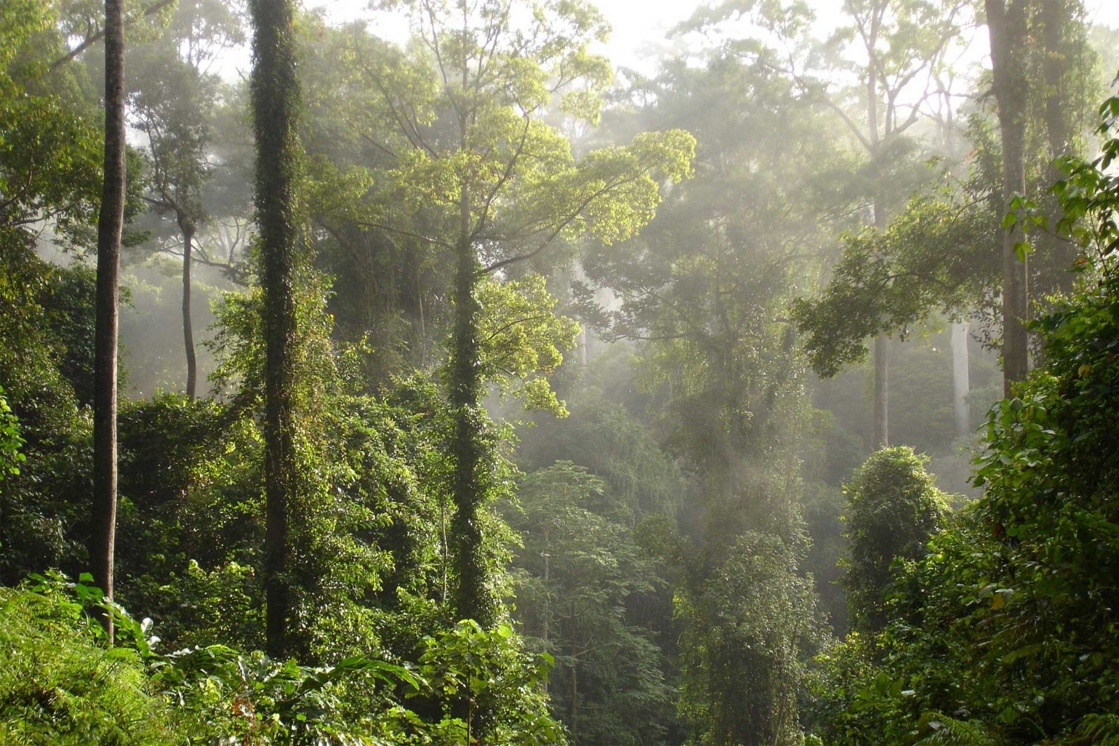 Borneo S Diverse Reef And Rainforests In Comfort And Style