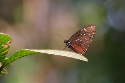 Indonesia-Wildlife-Tours_Accommodation_Udayana-4