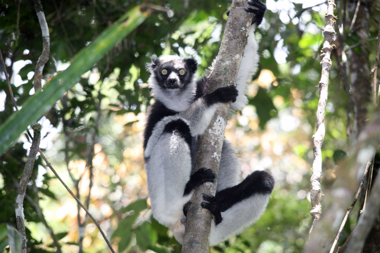 Madagascar-Wildlife-Tours_Accommodation_Andasibe-Hotel-3-Indri