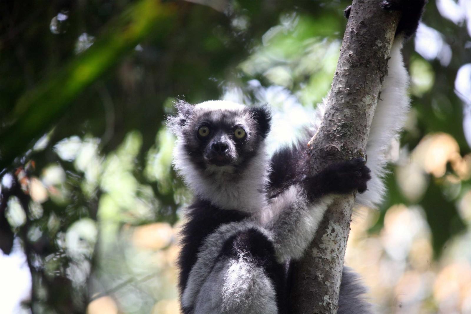 Madagascar-Wildlife-Tours_Accommodation_Andasibe-Hotel-4-Indri