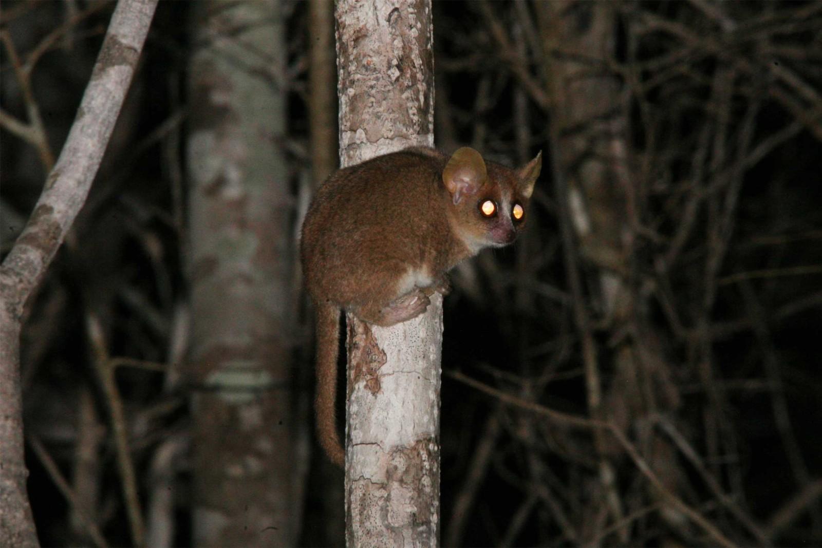 Madagascar-Wildlife-Tours_Accommodation_Kirindy-Eco-lodge-8