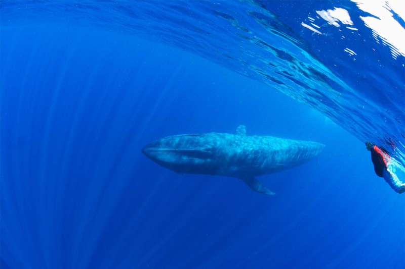 the blue whales of sri lanka reef and rainforest tours