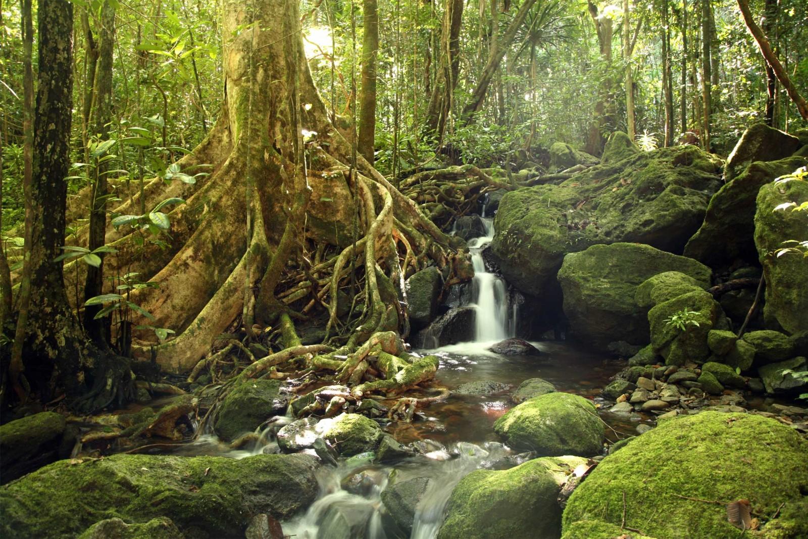Madagascar Wildlife Tours Tour Aye Aye And I Masoala Forest Scene Reef And Rainforest Tours