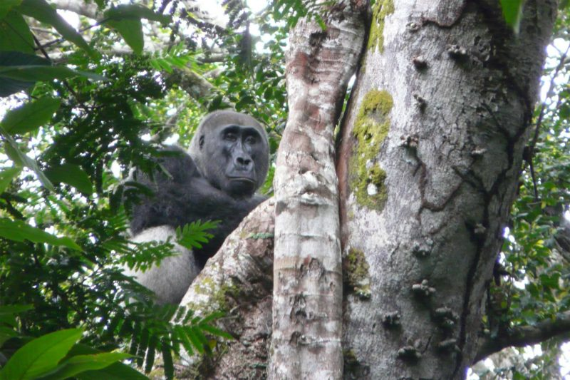 Congo-Wildlife-Tours_Accommodation_Ngaga-Camp-Neptune