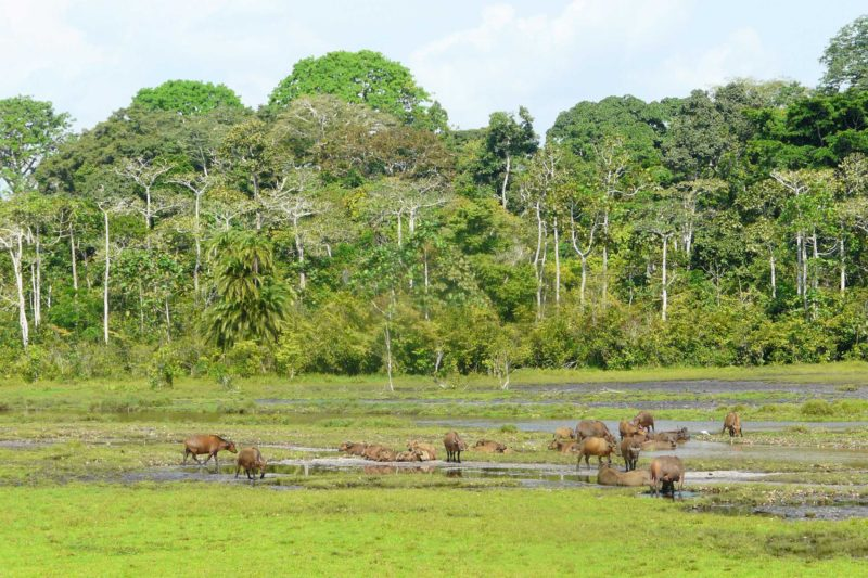 Congo-Wildlife-Tours_Odzala-Kokoua-National-Park
