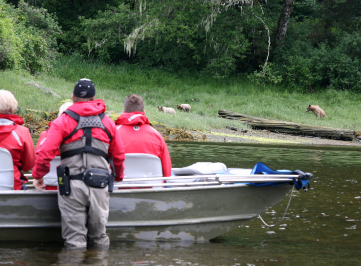Bear Viewing by boat