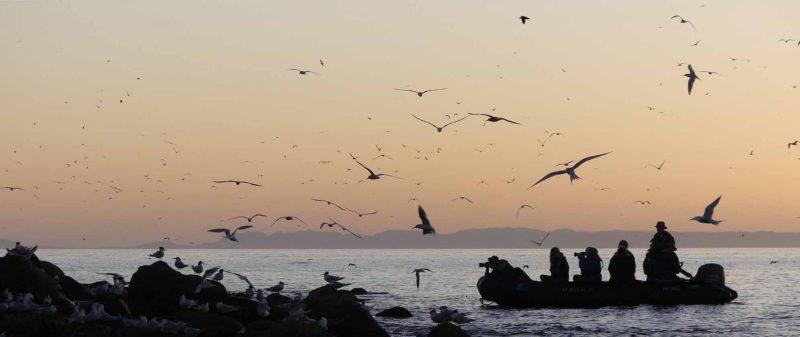 Sunrise, elegant terns, Rasa Island 2