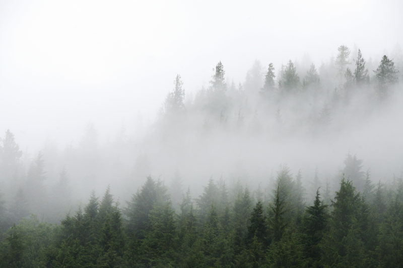 forest and clouds