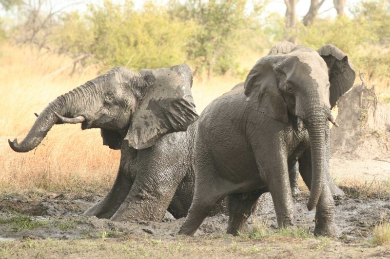 Best time to visit Chobe